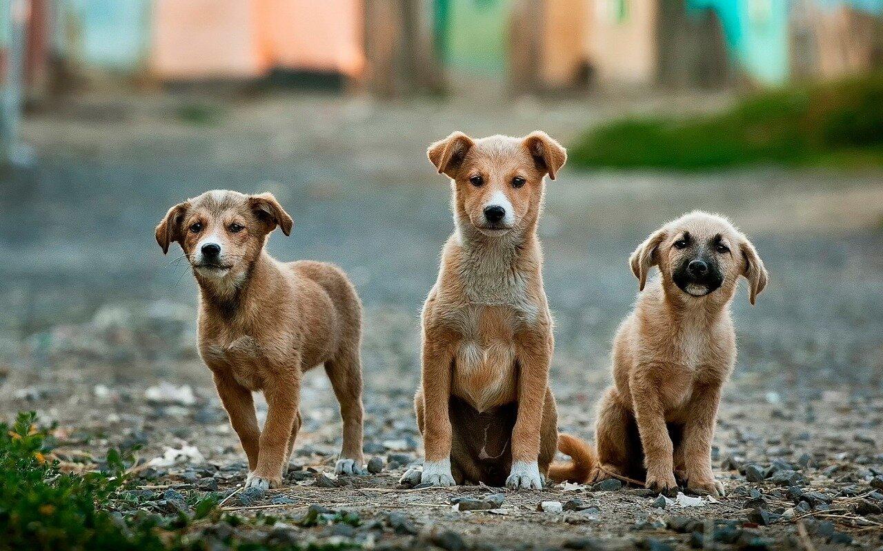 Szczepionka jako forma zapobiegania chorobom psów